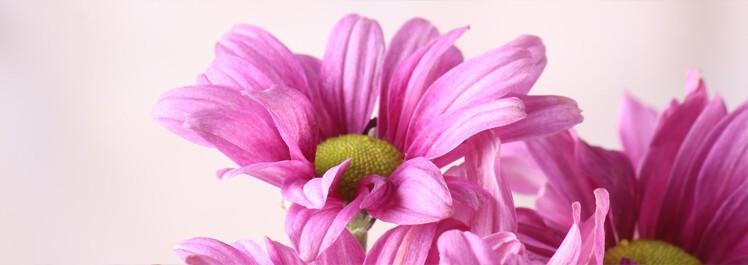 Ostatní kytice